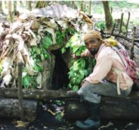 Picture 0 for Call for a Special Issue on Caribbean Ethnobotany